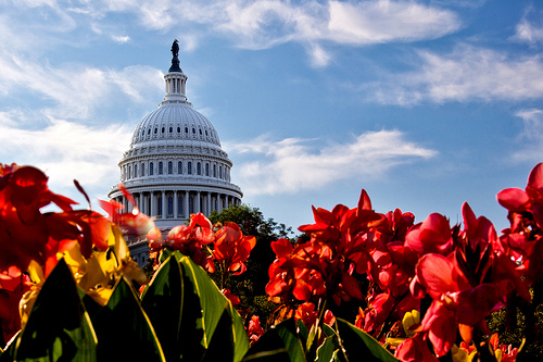Capitol and flowers